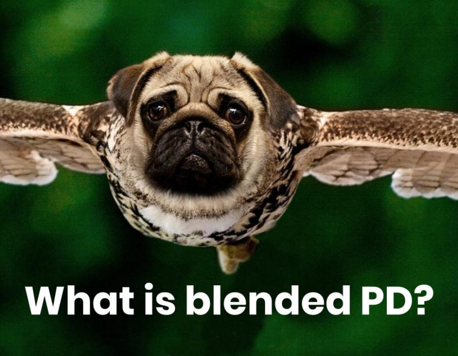 Picture of owl and pug hybrid with text: What is blended PD?